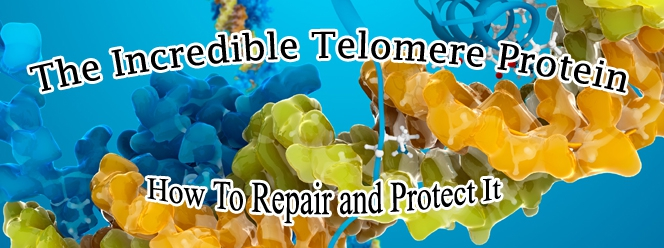 The Incredible Telomere Protein and Ultimatium�